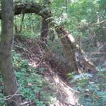 Před vtokem újezdeckého potoka do přírodního rybníka pod lesem